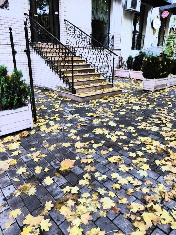 Vake Autumn leaves