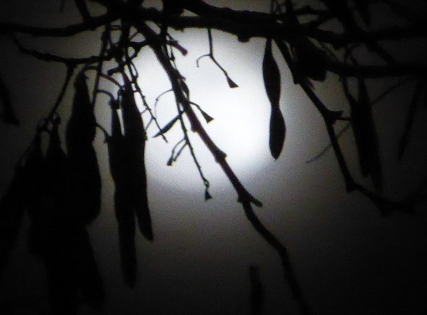 leaves by moonlight