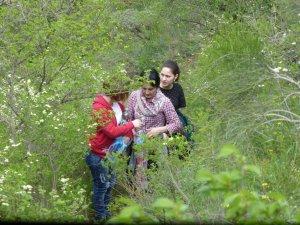 Through the vegetation...