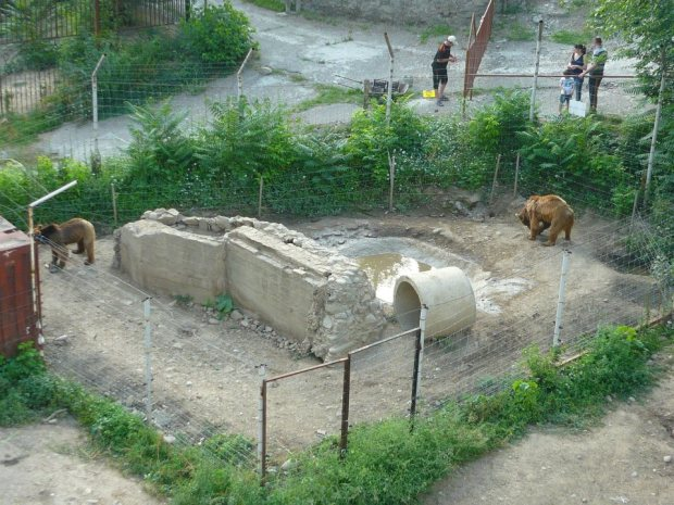 Bear pit, Tbilisi Zoo