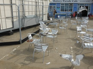 greedy gulls home in on discarded meals