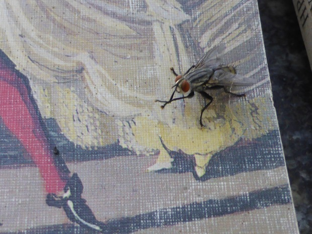 A fly on a book cover