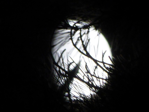branches across the moon