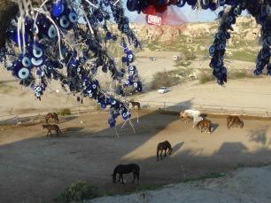 Cappadocian horses